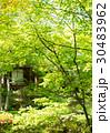 新緑 - 宝筐院 30483962