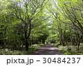 木 トレイル 森の写真 30484237