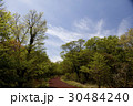 木 トレイル 森の写真 30484240