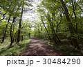 木 トレイル 森の写真 30484290