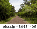 木 トレイル 森の写真 30484406