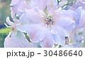 透明水彩 水彩画 ウォーターカラーのイラスト 30486640