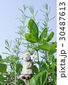 キッチンハーブの寄せ植え 30487613