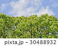木 空 雲の写真 30488932