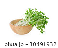 Sunflower sprouts  on white background 30491932