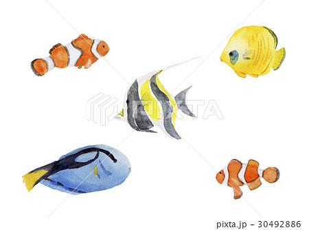 熱帯魚 水彩イラスト 30492886