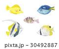 熱帯魚 魚 水彩のイラスト 30492887