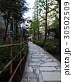新宿遊歩道公園 30502509