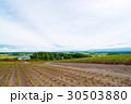 北海道の広大な農園 30503880