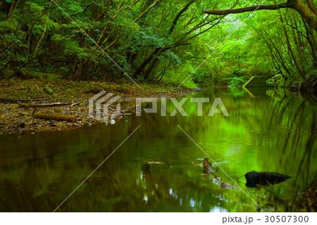 奄美大島の美しい川 (大和村フォレストポリス付近) 30507300