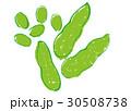 枝豆 水彩画 30508738