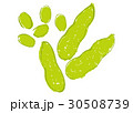 枝豆 水彩画 30508739