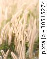 フラワー 花 草の写真 30515274