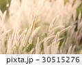 フラワー 花 草の写真 30515276