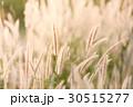 フラワー 花 草の写真 30515277