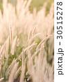 フラワー 花 草の写真 30515278