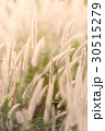 フラワー 花 草の写真 30515279