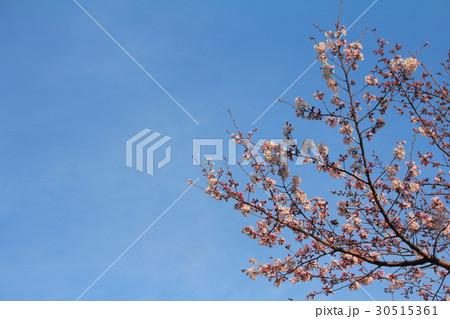 春空 30515361