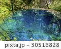 青森県 青池/十二湖 30516828