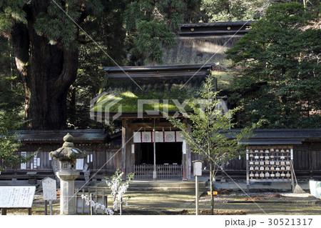 12月 若狭姫神社-若狭の一の宮-  30521317