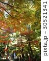 11月 遠州三山の一つ 医王山油山寺 30521341