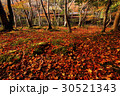 11月紅葉 京都嵯峨野の祇王寺 30521343
