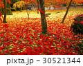11月 紅葉の永観堂 京都の秋景色 30521344