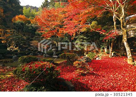 11月 紅葉の徳源院 近江の秋景色 30521345