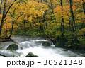 10月 紅葉の奥入瀬渓流 東北の秋  30521348