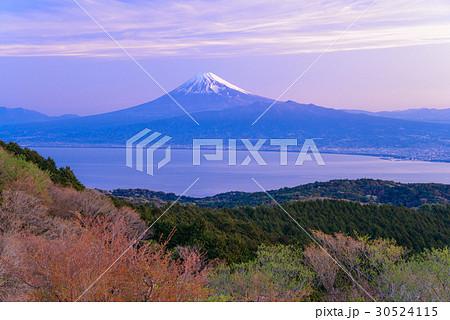 【静岡県】伊豆達磨山高原から富士山を望む、夜明け 30524115