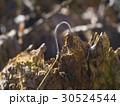 fishhook stuck in a piece of wood 30524544