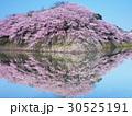 4月滋賀 彦根城・石垣と桜 30525191