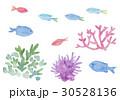 熱帯魚 珊瑚 イソギンチャク 水彩イラスト 30528136