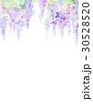 水彩 花柄 藤のイラスト 30528520