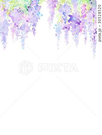 水彩 藤の花 テクスチャー 30528520