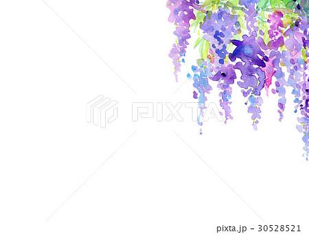 水彩 藤の花 テクスチャー 30528521
