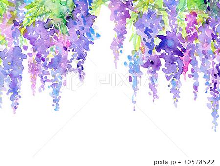 水彩 藤の花 テクスチャー 30528522