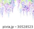 水彩 藤の花 テクスチャー 30528523
