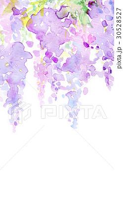 水彩 藤の花 テクスチャー 30528527