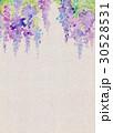 水彩 藤の花 テクスチャー 30528531