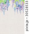 水彩 花柄 藤のイラスト 30528533