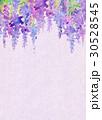 水彩 花柄 藤のイラスト 30528545