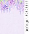 水彩 花柄 藤のイラスト 30528547