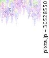 水彩 花柄 藤のイラスト 30528550