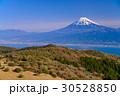 【静岡県】マメザクラ咲く伊豆の金冠山から富士山 30528850