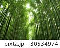 竹 竹林 竹藪の写真 30534974