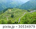 岐阜県の秘境 天空の茶畑 30534979