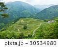 岐阜県 天空の茶畑 30534980