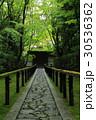 高桐院の新緑 30536362