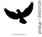 Pigeon bird  black silhouette animal 30537520